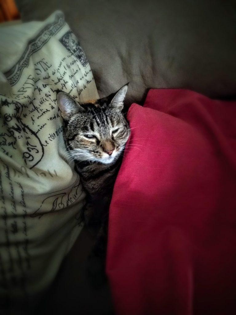 Día del abrazo al gato