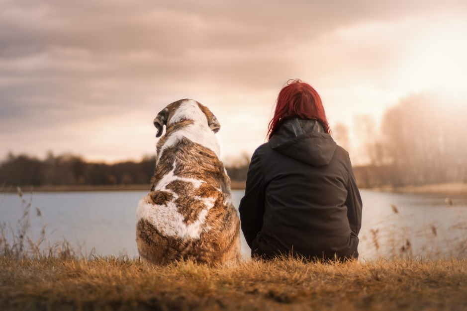 Homenajea a tu perro