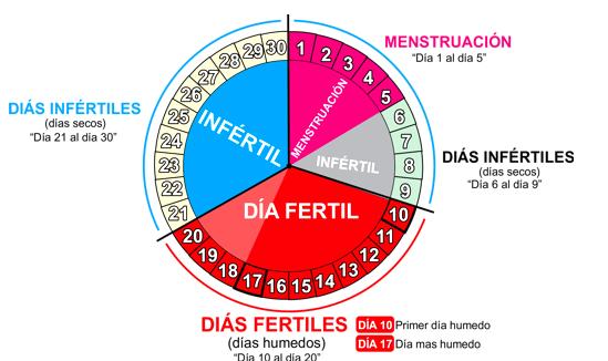 Calcular Días Más Fértiles De La Mujer