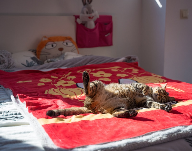 Beneficios de dormir la siesta