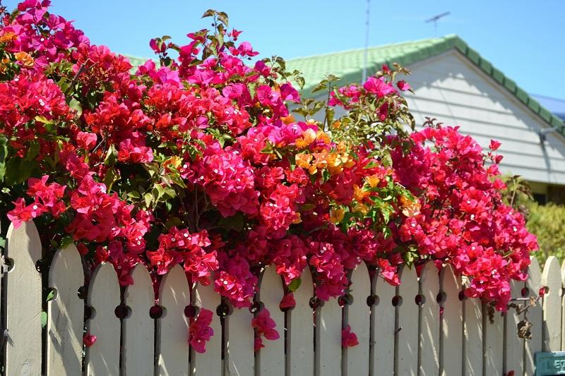 Cómo tener el jardín perfecto